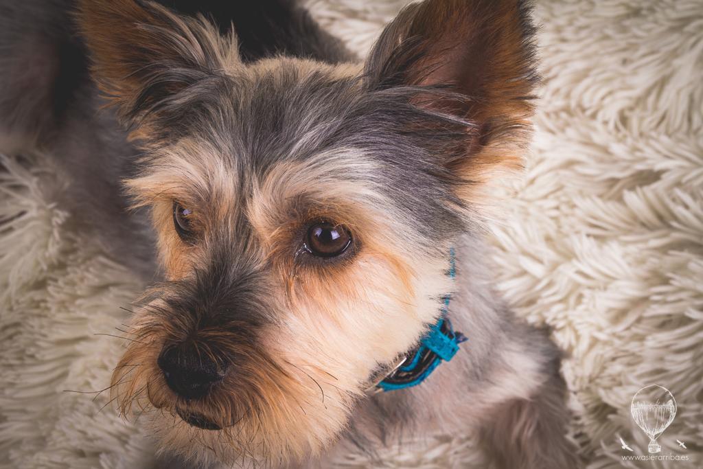 Sesión de perros en Vitoria